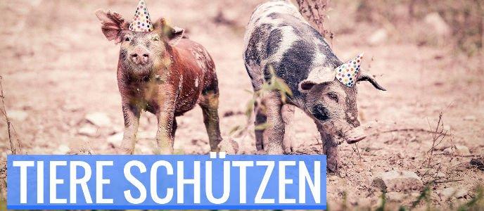 SPD-Bundestagswahlprogramm: Tierschutz-Bausteine für Sozialdemokrat*innen