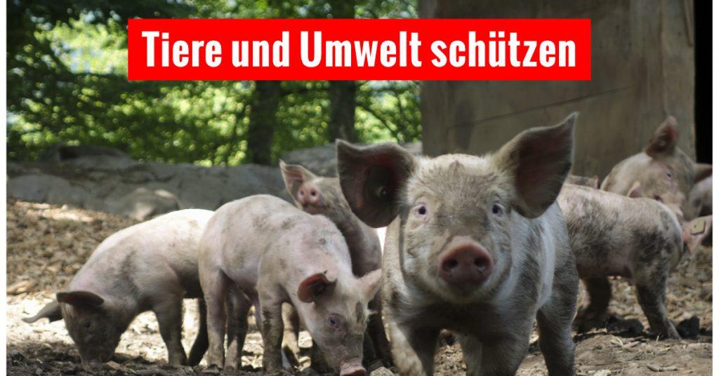 Schweine zwischen Bäumen