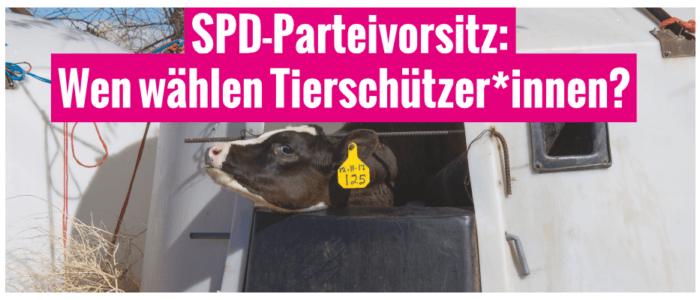 SPD-Parteivorsitz: Wen wählen Tierschützer*innen?